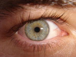 Occhio Vesticolor