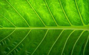 Verde 2017
